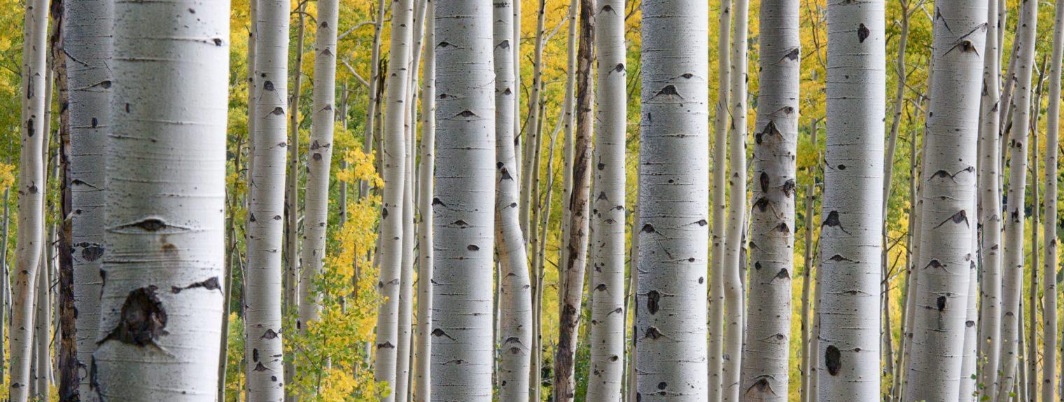 Energia dai boschi